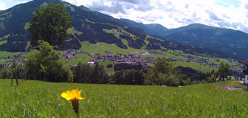 Austria_Austrian-Tyrol_Westendorf_field-lonely-flower.jpg